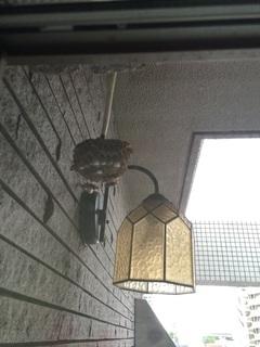 蜂の巣 �@.jpg